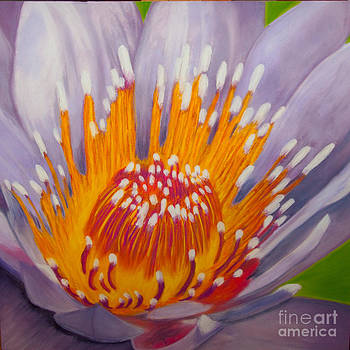 Lotus by Dana Kern