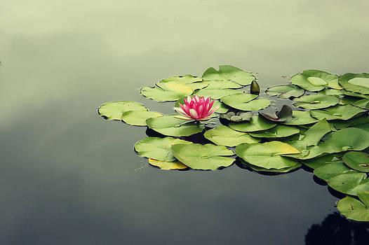 Lotus Flower by Barbara Ki