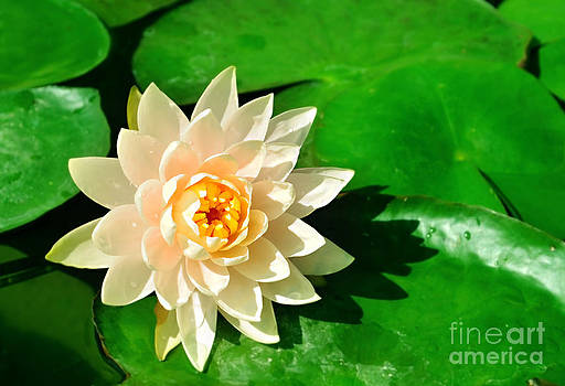 Lotus flower on the water by Jeng Suntorn niamwhan
