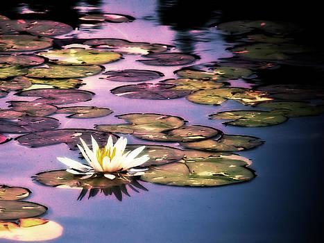 Lotus Flower Sunset by Bill Boehm