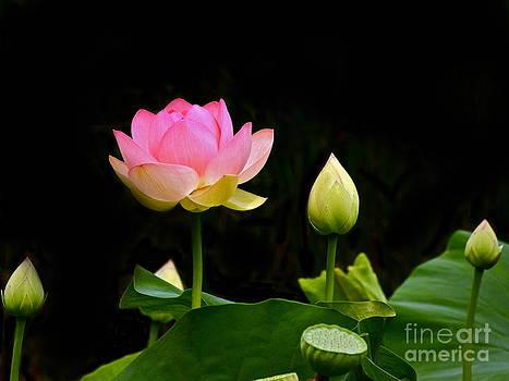 Byron Varvarigos - Lotus Full Lotus Bright