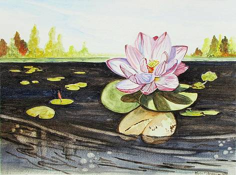 Lotus Fun by Kevin F Heuman