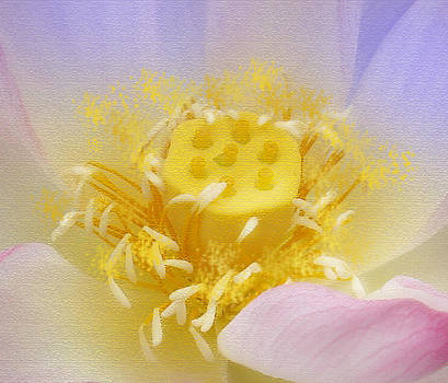 Lotus in side by Lila Shravani