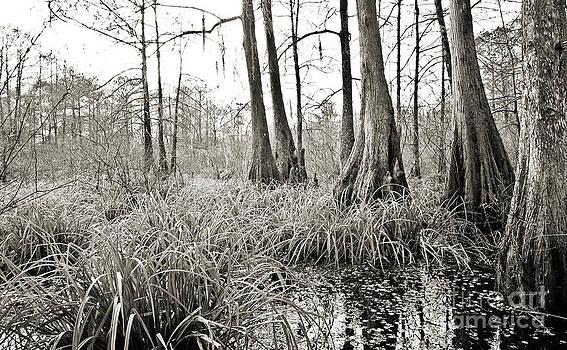 Scott Pellegrin - Louisiana Swamp