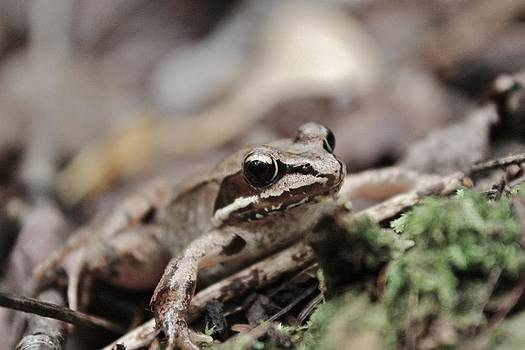 Love Frogs by Samantha Howell