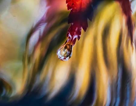 Love Ignites by Kenneth Haley