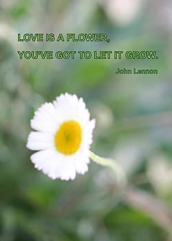 Kathy Peltomaa Lewis - Love Is A Flower