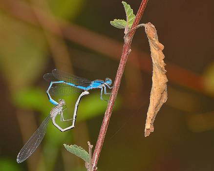 Love is in the air. by Old Pueblo Photography