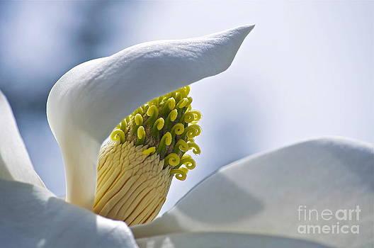 Gwyn Newcombe - Love of Nature