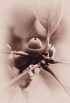Lovely Acorns by Heather Bridenstine