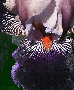 Lovely Iris by Wide Awake Arts