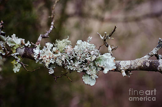 Lovely Lichen by Victoria Lawrence