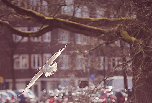 Jenny Rainbow - Low Flight. Pink Spring in Amsterdam