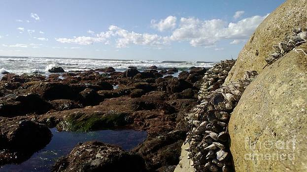 Low Tide Cabrillo National Monument by Dean Robinson