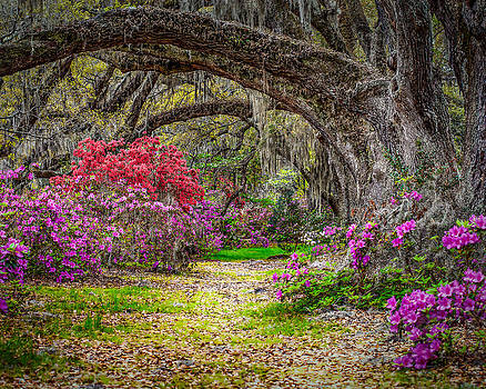 Lowcountry Spring by Steve DuPree