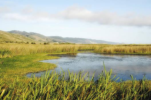 Donna Blackhall - Lowland Marshes