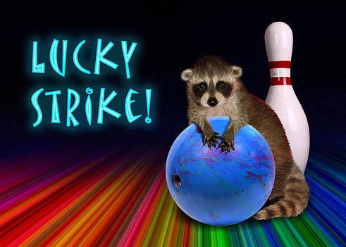 Jeanette K - Lucky Strike Raccoon