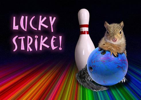 Jeanette K - Lucky Strike Squirrel