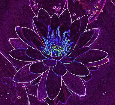 Luminous Lotus by Jill Moran