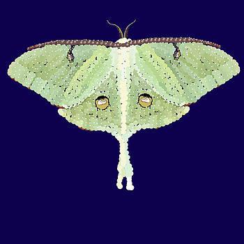 Luna Moth by R  Allen Swezey