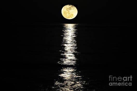 Lunar Lane by Al Powell Photography USA