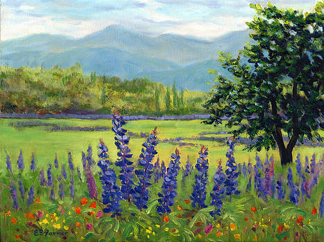 Lupine Field by Elaine Farmer