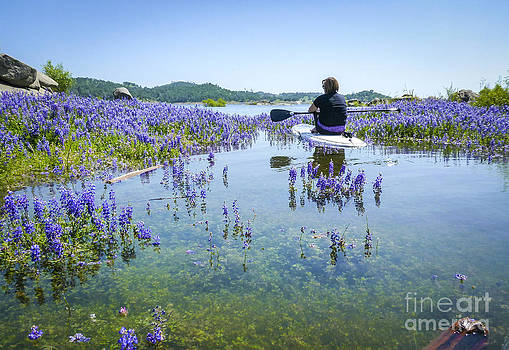 Lupine Paddling Fantasy by Cheryl Wood