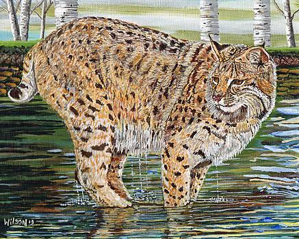 Lynx on the Rocks by Sandra Wilson