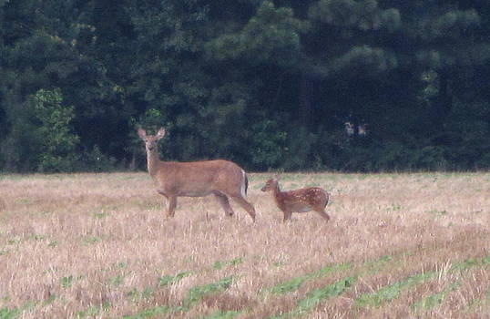 Mable The Female Deer with Harriet The Baby Fawn by Debbie Nester