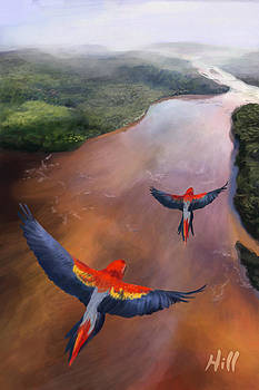 Macaws in Flight by Kevin Hill