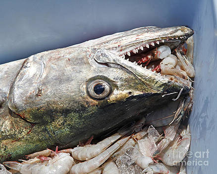 Mackerel Fish and Shrimp by Luana K Perez