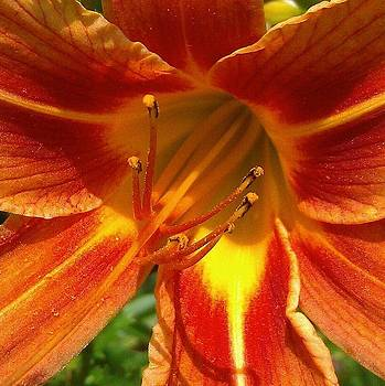 Macro Lily by Courtnee Epps