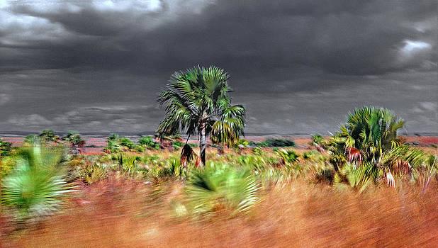 Daniel Furon - Madagascar L