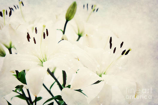 Angela Doelling AD DESIGN Photo and PhotoArt - Magic Flowers