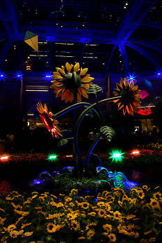 Donna Blackhall - Magic Garden