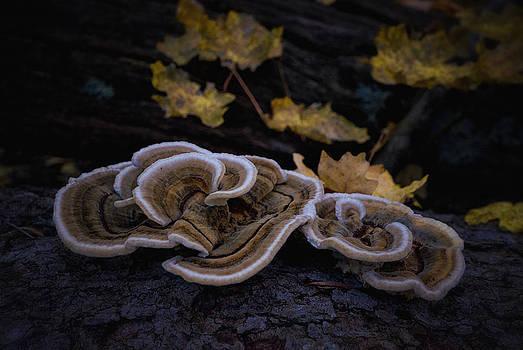 Saija  Lehtonen - Magic Little Mushrooms