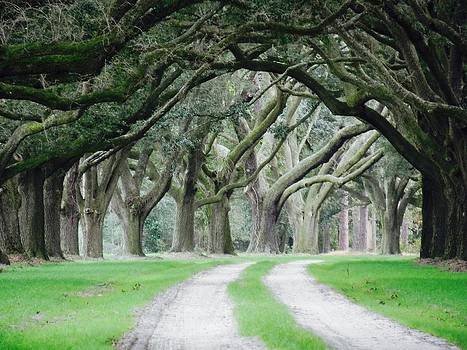 Magic Live Oaks by Patricia Greer