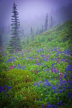 Randall Branham - Magic Mountain flowers