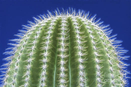 Sandra Bronstein - Magic of the Saguaro