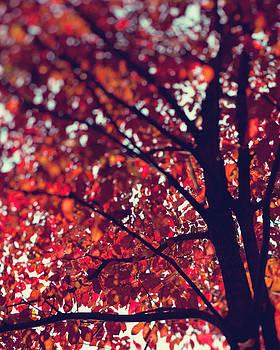 Magical Autumn by Kim Fearheiley