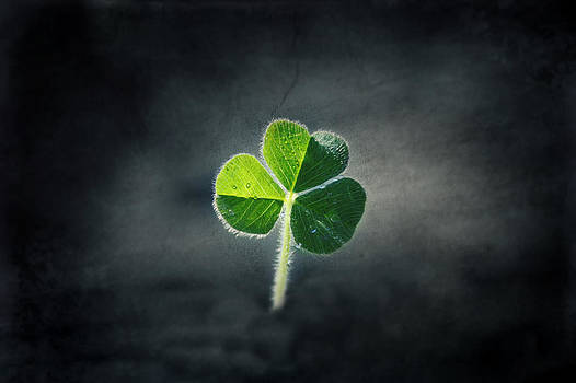 Magical Clover by Melanie Lankford Photography