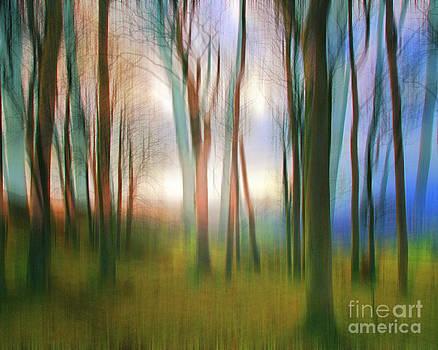 Magical Woods by Edmund Nagele