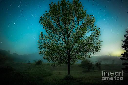Magicland by Chuck Alaimo