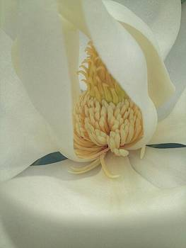 Magnificent Magnolia by Stella Oliver