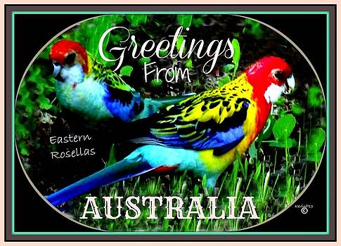 Magnificent Rosellas' Card by Kevin Perandis