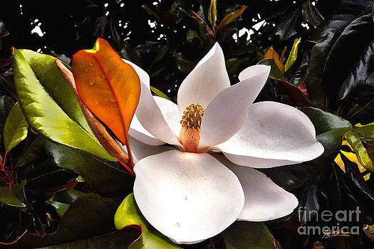 Jeff McJunkin - Magnolia Bloom