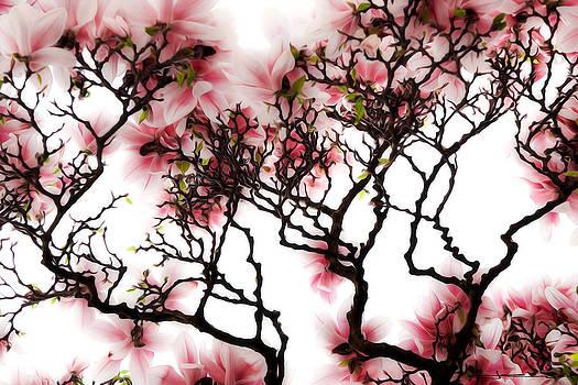 Magnolia Blossom Sky by Jens Tischer