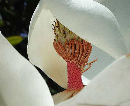 Magnolia Nun by Leon Hollins III