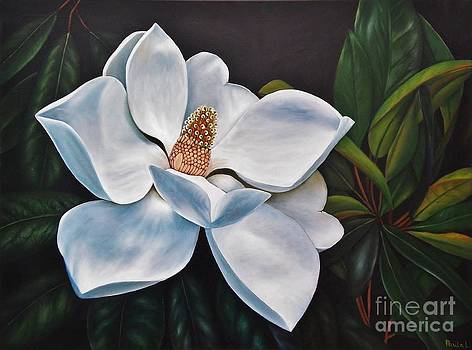 Magnolia by Paula L