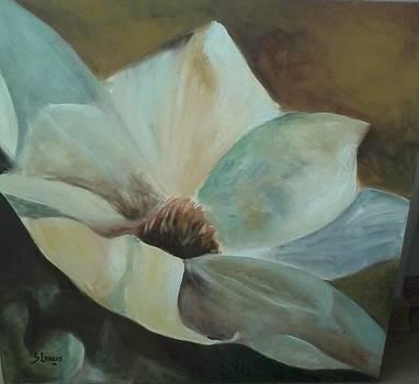 Magnolia by Silvia Lemos